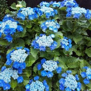 花のクローズアップの写真・画像素材[3416825]