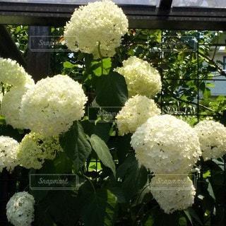 花のクローズアップの写真・画像素材[3416884]