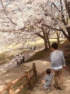 家族,風景,公園,花,桜,花見,樹木,幼児,草木,ブロッサム