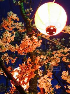 花,春,桜,綺麗,花見,夜桜,明るい