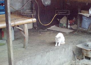 土間で寛いでいる猫の写真・画像素材[2912705]