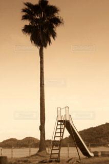 ヤシの木と滑り台の写真・画像素材[2915073]