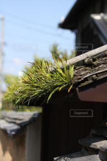 樋に生えた草の写真・画像素材[2918142]