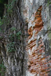 煉瓦の壁の写真・画像素材[2918147]