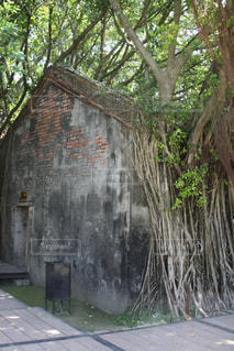 根に覆われた家の写真・画像素材[2918148]