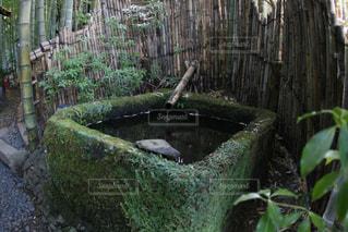 苔のつくばいの写真・画像素材[2918150]