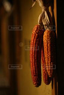 トウモロコシの写真・画像素材[2918156]