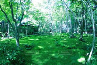 森の中の木の写真・画像素材[3157112]