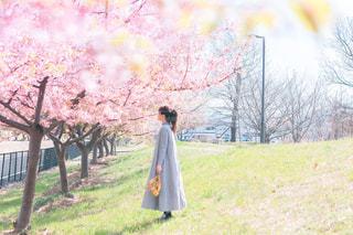 女性,1人,風景,花,桜,樹木,ミモザ,スワッグ