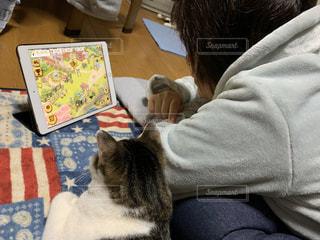 女性,家族,猫,動物,屋内,仲良し,ペット,人物,人,ネコ