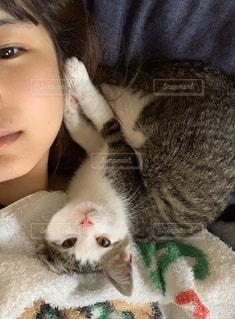女性,猫,動物,ペット,子猫,人物,人,ネコ,ネコ科の動物