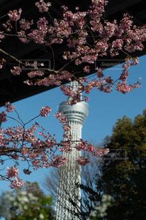 空,花,桜,スカイツリー