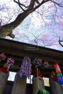 自然,空,花,桜,屋外,しだれ桜,満開,樹木,お花見,イベント,桜の花,桜の木,お地蔵さま,エドヒガン桜,寿永の桜