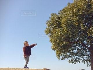 木を指差すこどもの写真・画像素材[2938286]