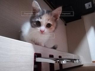 猫,動物,屋内,ピアノ,ペット,子猫,人物,座る,メス,ネコ,ネコ科の動物