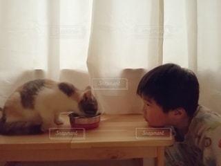 1人,猫,動物,屋内,カーテン,子供,仲良し,テーブル,ペット,子猫,人物,癒し,ご飯,こども,餌,男の子,見つめる,4歳,触れ合い,三毛猫,マンチカン,視線,コミュニケーション,男児,躾,凝視,室内飼い,消化不良,ダイリュートキャリコ,情操教育