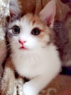 猫のクローズアップの写真・画像素材[2980597]