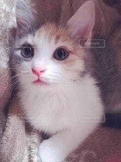 猫のクローズアップの写真・画像素材[2980598]