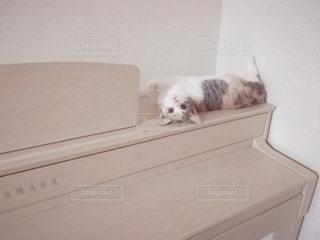ピアノの上の猫の写真・画像素材[2981927]