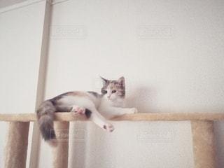 キャットタワー上に横たわる猫の写真・画像素材[2981931]