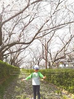 桜並木で手を広げる少年の写真・画像素材[2981951]