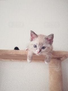 キャットタワーに横たわる猫の写真・画像素材[2983126]