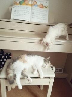 寝ている猫にちょっかいを出す子猫の写真・画像素材[2990659]