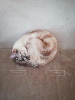 丸くなって寝る猫の写真・画像素材[2993273]