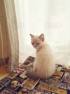 振り返る子猫の写真・画像素材[2993665]