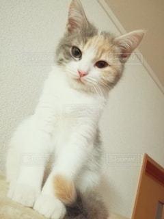 座る猫の写真・画像素材[2993664]