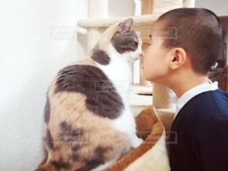 鼻と鼻をくっつける猫と男の子の写真・画像素材[2997264]