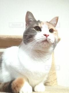 猫のクローズアップの写真・画像素材[2997591]