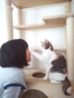 猫パンチされる女の子の写真・画像素材[2997594]