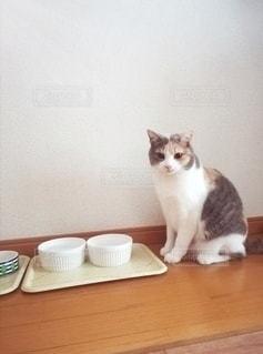 ごはん待ちの猫の写真・画像素材[3012033]