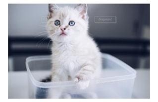 タッパーの中の子猫の写真・画像素材[3020838]