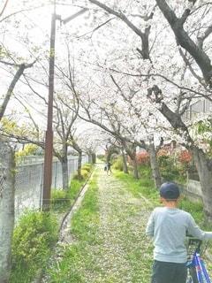 子ども,1人,3人,風景,公園,花,桜,屋外,桜並木,草,樹木,人,草木