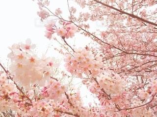 花のクローズアップの写真・画像素材[3062468]