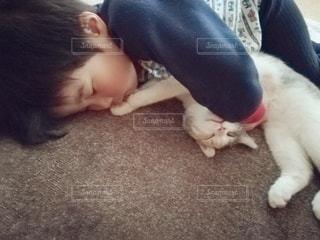 小さな子供が猫と寝ているの写真・画像素材[3102227]