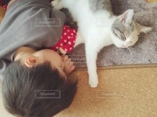 猫と寝ている子どもの写真・画像素材[3102231]