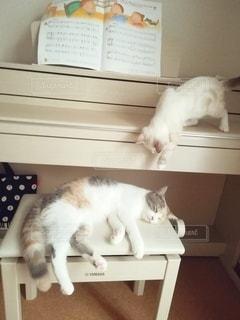 2匹の猫の写真・画像素材[3102242]