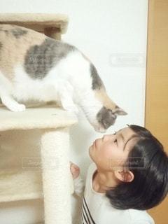 娘と猫の写真・画像素材[3375352]