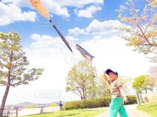 鯉のぼりの写真・画像素材[4134334]