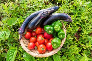 地物野菜の盛り合わせの写真・画像素材[3722088]