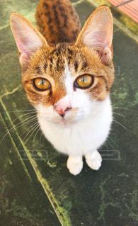 猫,動物,緑,ペット,ネコ,ニャン,ニャー,猫の日,2月22日