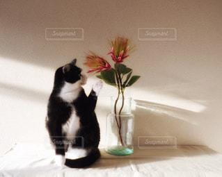 猫,花,動物,朝日,部屋,光,ペット,座る,雰囲気,ネコ,棚の上,猫の日,2月22日