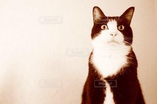 見つめる猫の写真・画像素材[2982174]