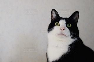 ネコの写真・画像素材[2982191]
