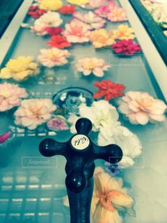 水に浮かぶ花の写真・画像素材[2999004]