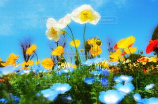 お花畑の写真・画像素材[3003364]