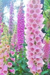 花のクローズアップの写真・画像素材[3031002]